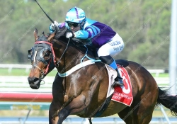 Visona Playboy wins at the Sunshine Coast